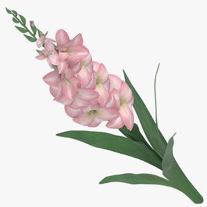 3D model pink -