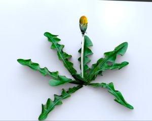 3D dandelions weed gardeners