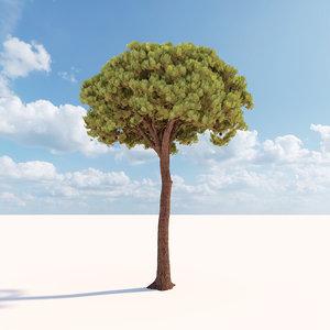 corona pinus pinea 3 3D model