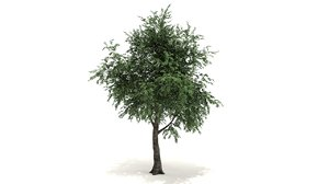 morton tree 3D model