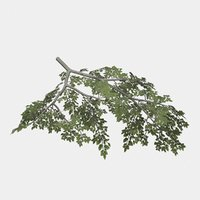 3D model rigged tree branch types