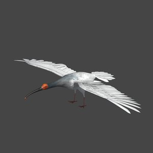 crested ibis model