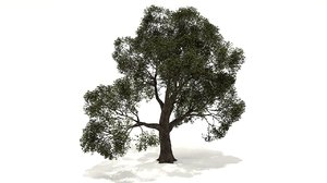 oak tree 3D
