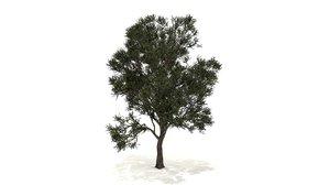 3D oleaceae tree model