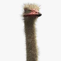 3D ostrich realistic hair