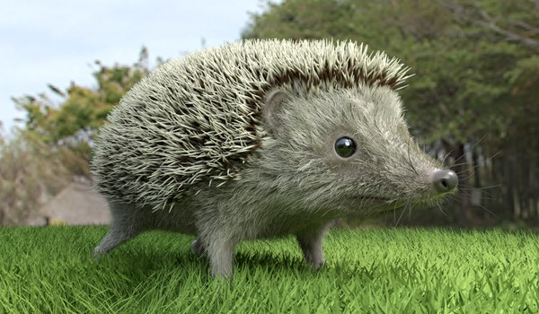 3D realistic hedgehog model