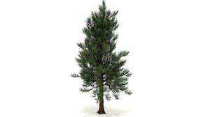 pinus taeda tree 3D model