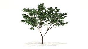 3D plumeria tree