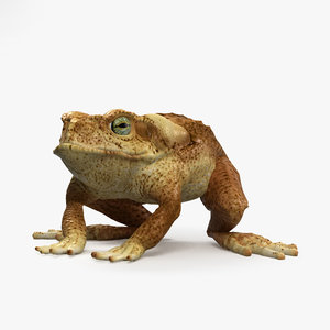 3D cane toad