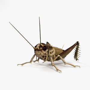 cricket true 3D model