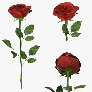 3D rose red single