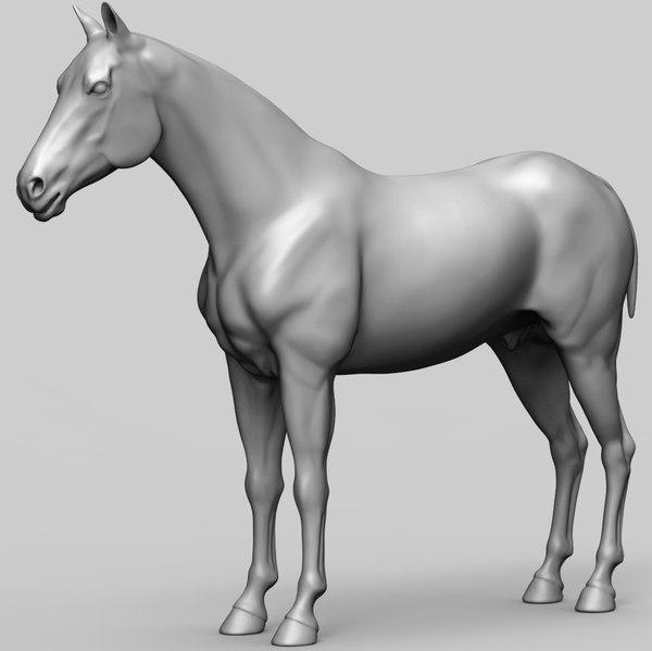 zbrush horse base mesh 3D model