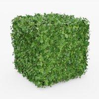 topiary bush model