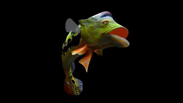 peacock bass rigged 3D model