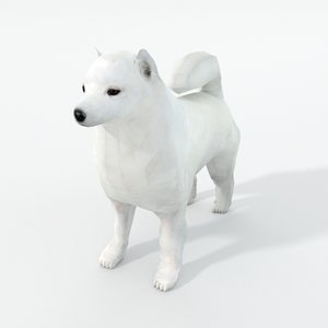 3D samoyed white model