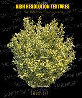 Bush 01 texture