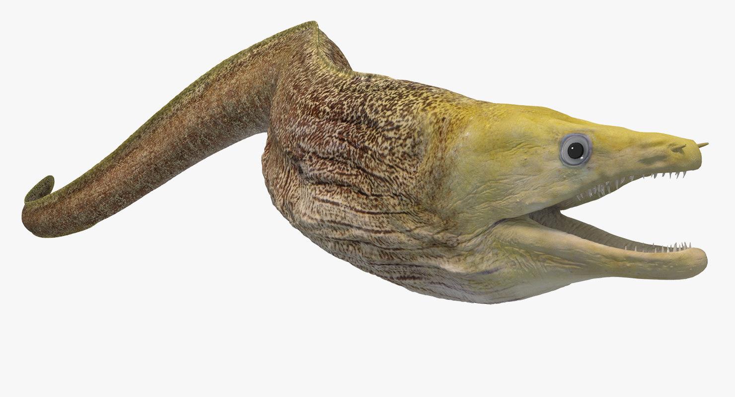 3D moray animation