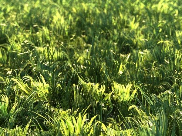 3D grass tree