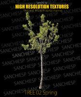 Tree 02 Spring Texture