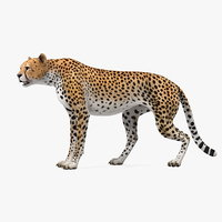 3D cheetah rigged