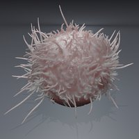 3D model cell lymphocyte