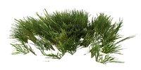 Grass  Animated LP