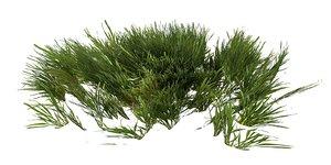 3D grass lp