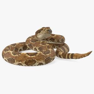 rattlesnake snake rattle rigged 3D model
