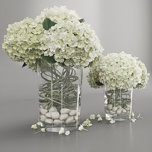 3D bouquet hydrangeas white model