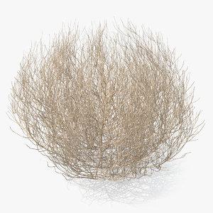 desert tumbleweed tumbled 3D