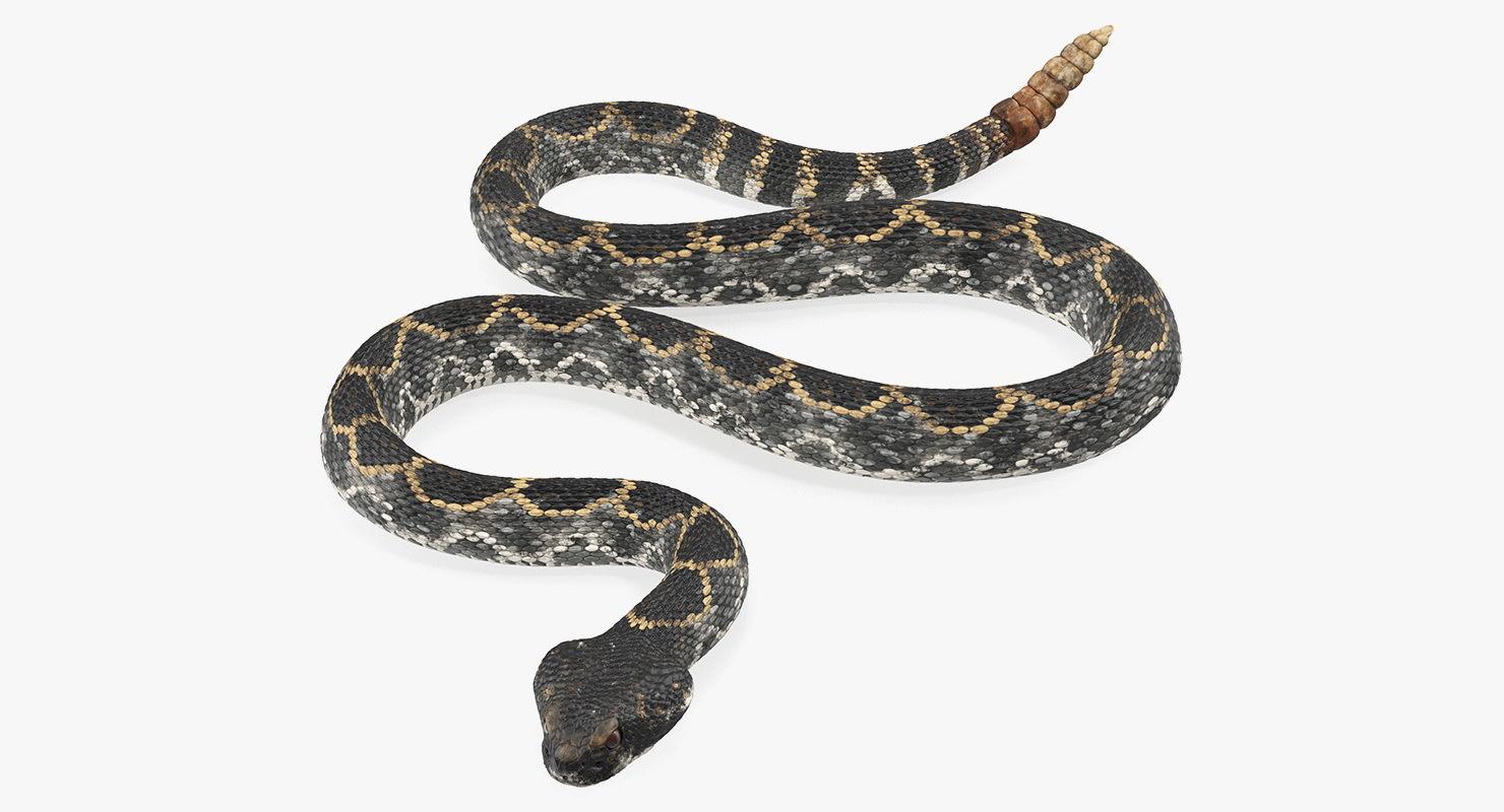 3D dark rattlesnake crawling pose