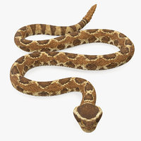 Light Rattlesnake Crawling Pose