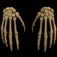 3D model hand arm bone anatomy