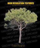 Tree Pine 01