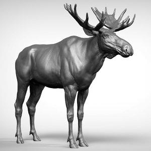 3D moose ztl zbrush model