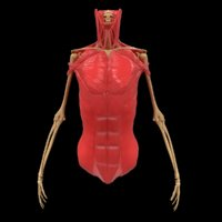 torso arm spine muscle 3D model