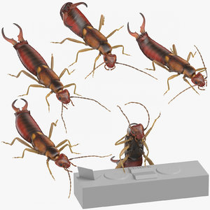 earwigs standing attacking 3D