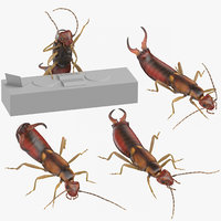 3D earwigs poses