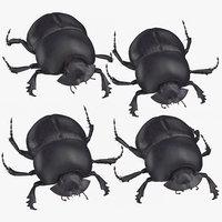 3D black scarab beetle