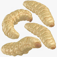 maggots rolled crawling model
