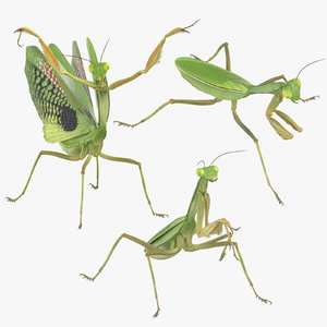 3D model insects praying mantis