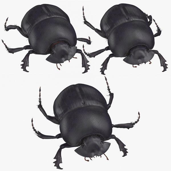 black scarab beetle poses 3D model