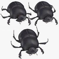 Black Scarab Beetle Poses
