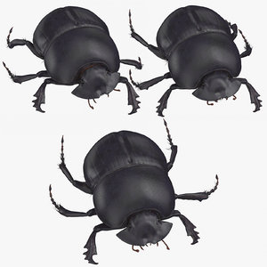 black scarab beetle poses 3D model