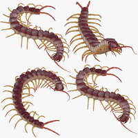 centipedes standing coiled 3D model