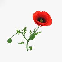 3D poppy flowers plant model