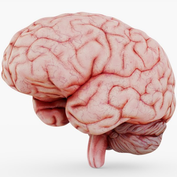 3D halloween brain model