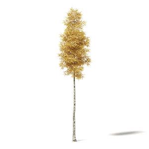 3D silver birch 14 5m model