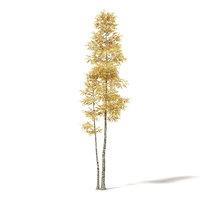 silver birch 11m 3D model
