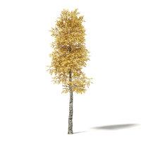 3D silver birch 8 5m